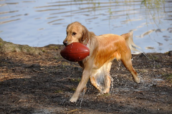 Kiara with football